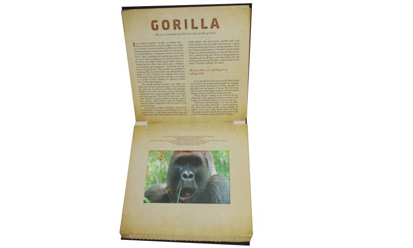 Safari Photicular Book Insaide Page Gorilla