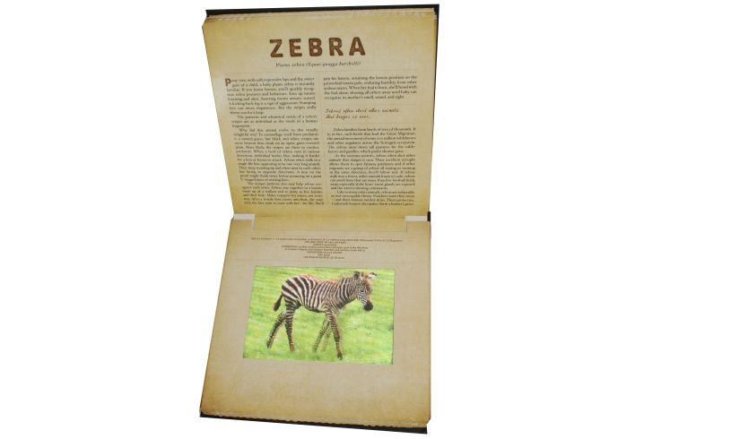 Safari Photicular Book Inside Page Zebra