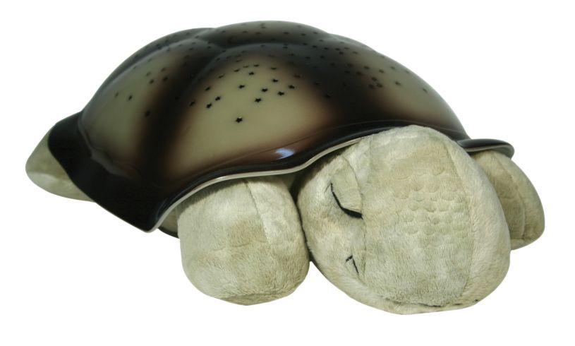 Twilight Turtle Close Up
