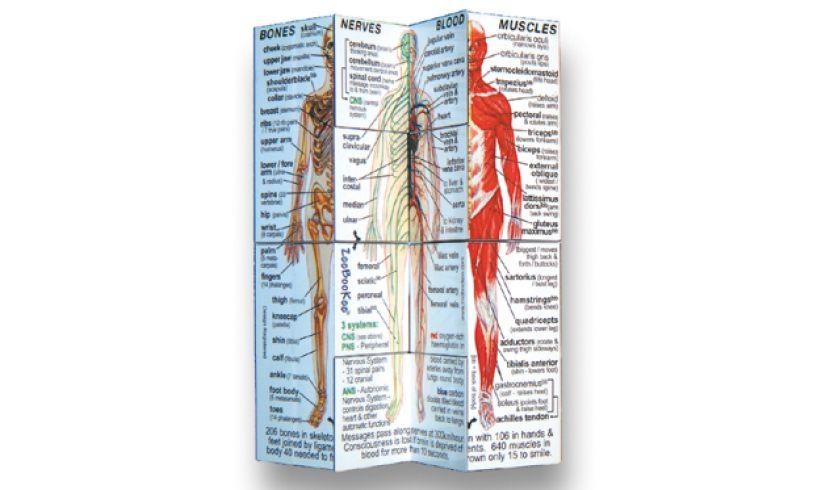 Human Body Cube Book