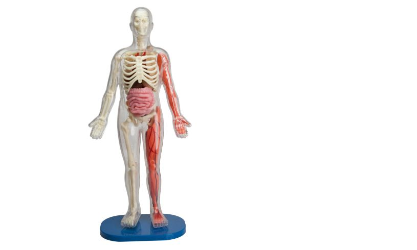 Squishy Human Body Front