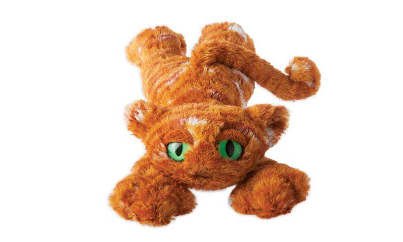 Ginger - Lavish Lanky Cat