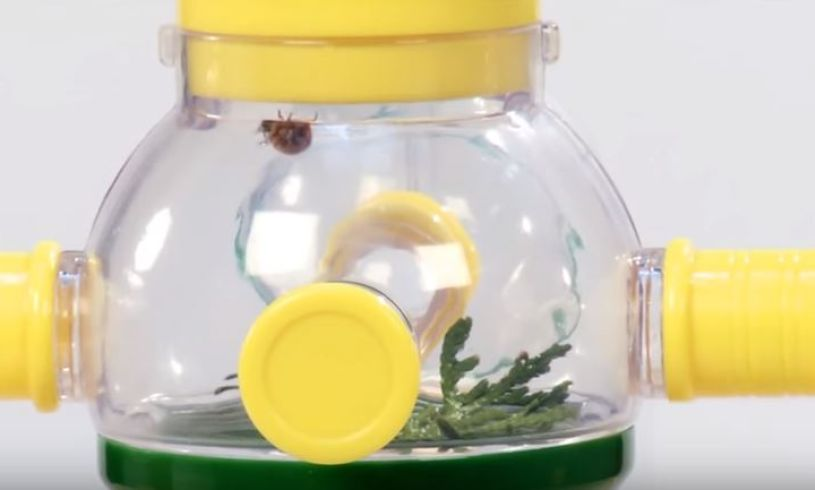 Bug Podz Lifestyle