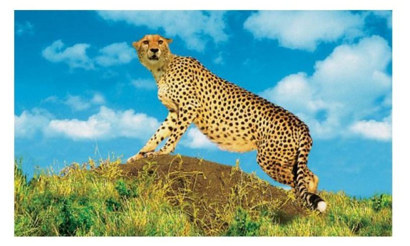 Animal Projector Cheetah