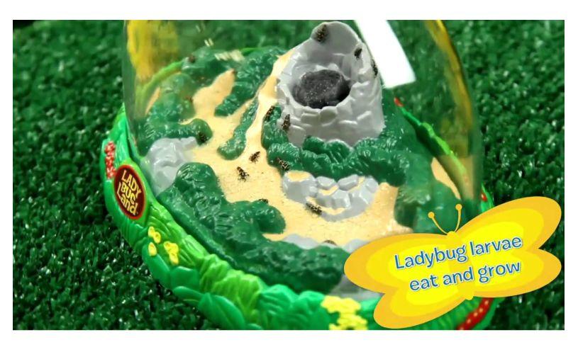 Ladybug Land Detail