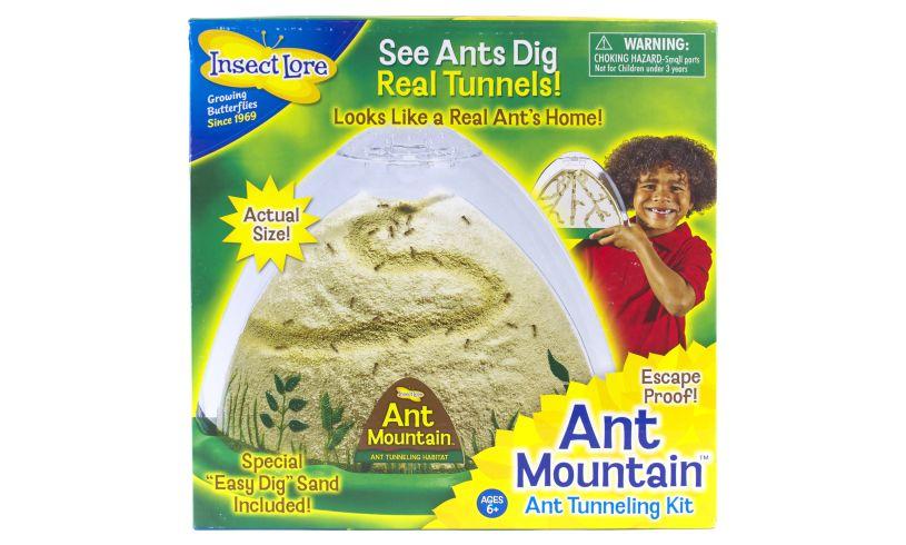 Ant Mountain Box