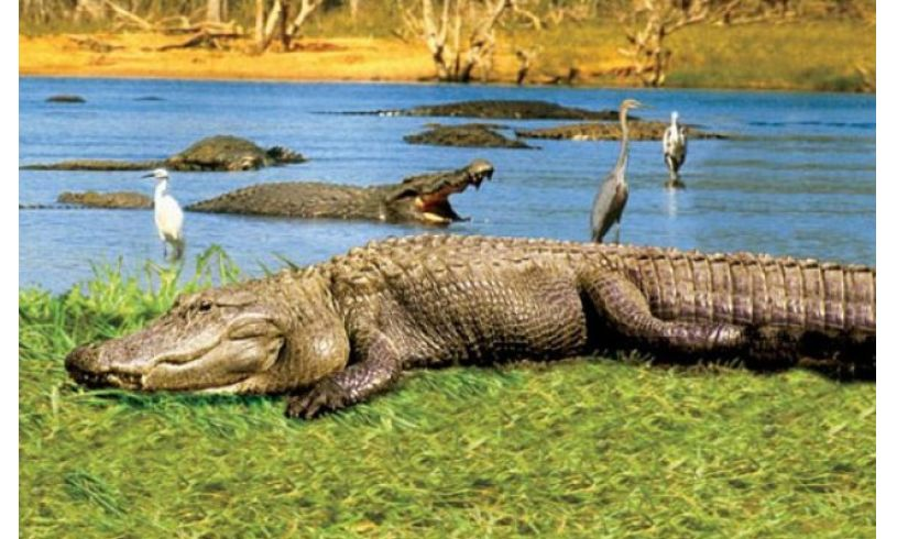 closeup of alligator slide
