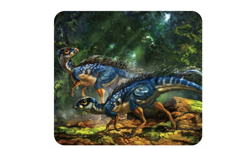 slides of two dinosaurs