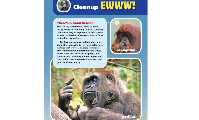 Animals that Make Me Say EWWW! Cleanup