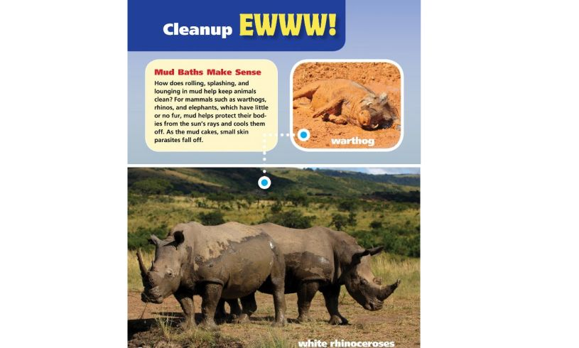 Animals that Make Me Say EWWW! Mud