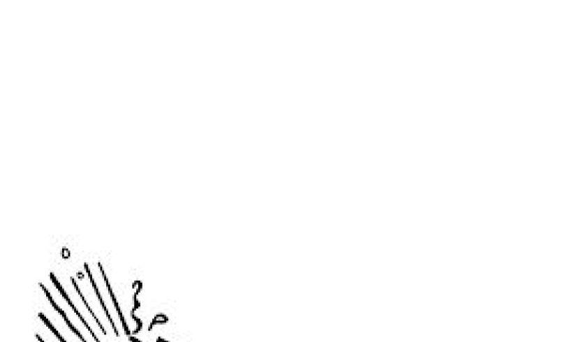 Monster Doodles for Kids Detail 1