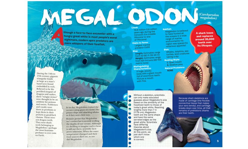 Shark fact book page sample