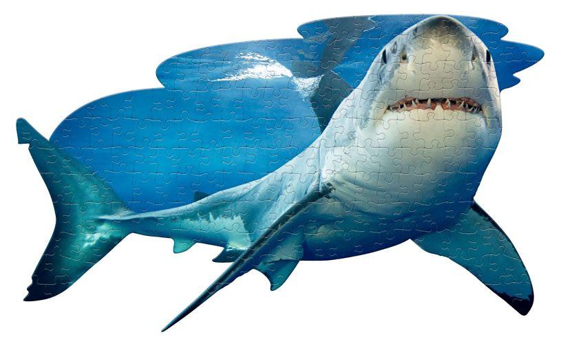 I Am Lil' Shark