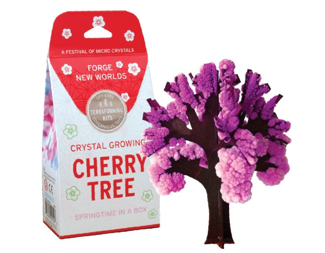 Cherry Tree all