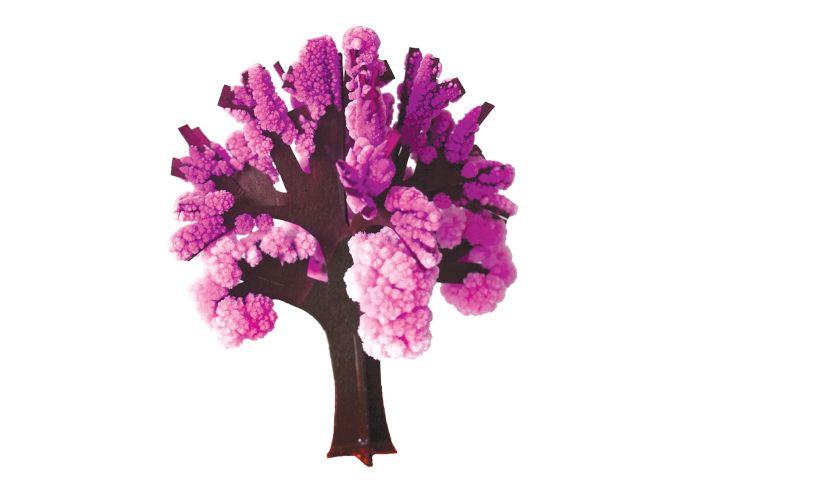 Cherry Tree complete