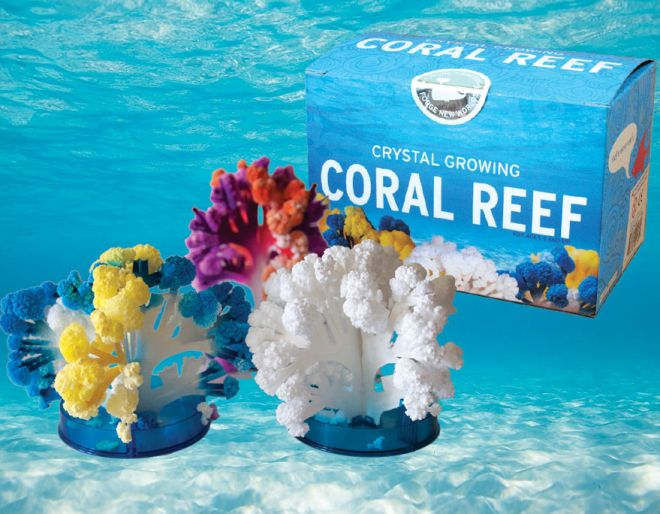 Coral Reef all